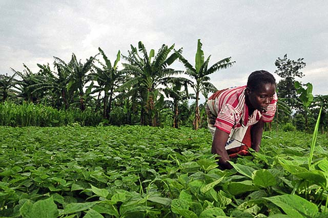 agriculture-congo1