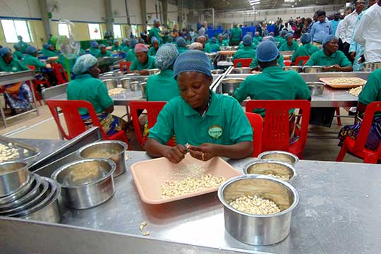 blog_a-new-model-for-benins-cashew-industry