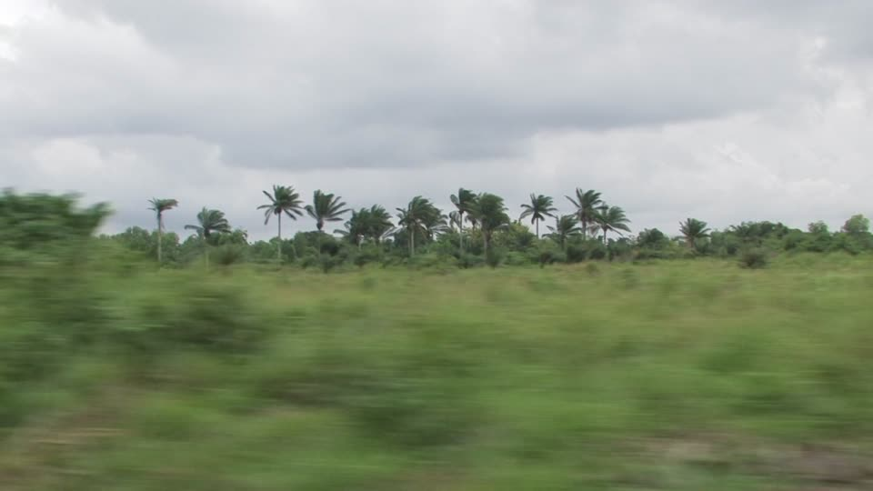 865018230-benin-palm-plant-forest-cloudy