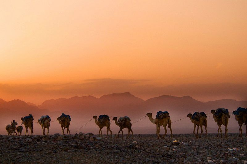 The Danakil Depression - Camel caravan