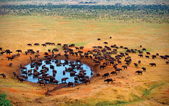 East-Africa-Kenya-Tanzania-Masai-Mara-Water-Buffalo-2up