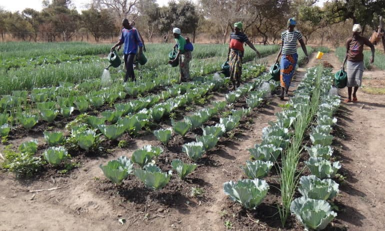 Farmers In Eastern Burkina Faso Watering Their Agroecologically Grown Crops-770x462