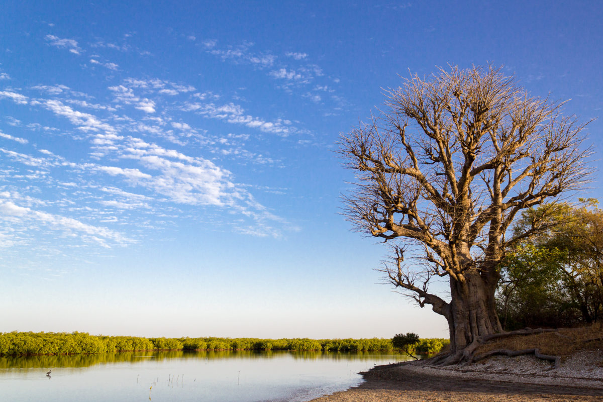 Senegal-peaceful-scene-in-sine-saloum