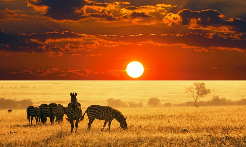 South-africa-safari-sunset-1000x600