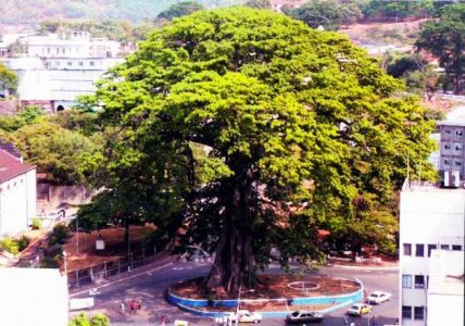 Cotton-tree-Freetown