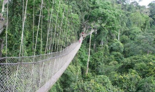 Tree-canopy-rope-walk-in-Kakum-National-Park-compressor