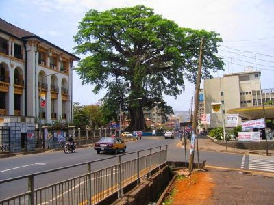 Cotton-tree-freetown-1[6]