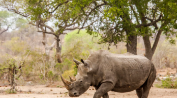 Mkhaya Game Reserve one of the best places in Africa for close encounters with rhino
