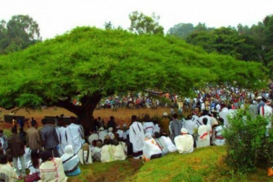 Photo-Oromo-cultural-meeting-under-a-tree