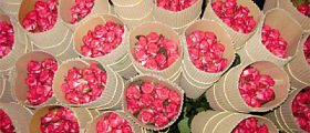Ethiopian-Flower-export