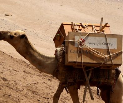 Camel library proves a hit for locked down Ethiopian kids