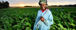 A climate-smart success story for African agriculture